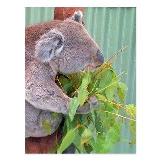 Ein Koala in Australien-Postkarte Postkarte