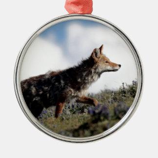 Ein Kojote geht in Yellowstone Nationalpark, Wyomi Silbernes Ornament