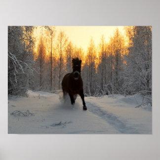 Ein laufendes Pferd am Winter in Finnland Poster