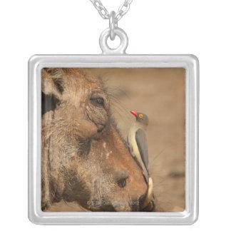 Ein Oxpecker auf einer warthogs Schnauze, Versilberte Kette