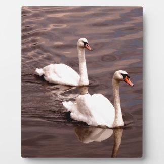 Ein Paar Schwäne auf dem See Fotoplatte
