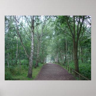 Ein Sherwood Forest-Weg Poster