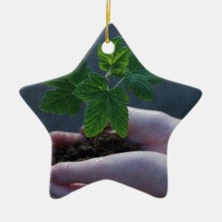 Ein Sprössling auf einer Hand Keramik Stern-Ornament