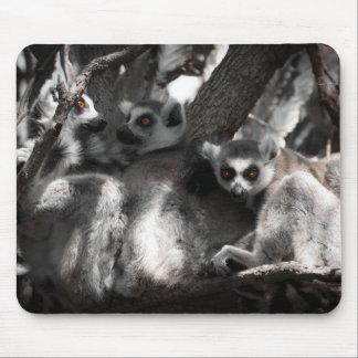 Ein Trio der südafrikanischen Lemurs Mauspads