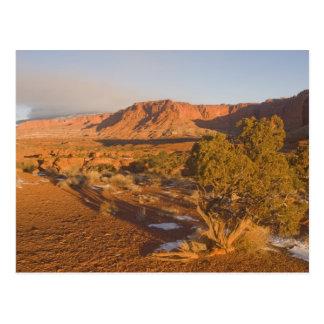 Ein Utah-Wacholderbusch-Juniperus osteosperma) Postkarte