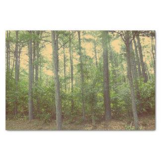 Ein Weg im HolzSeidenpapier Seidenpapier
