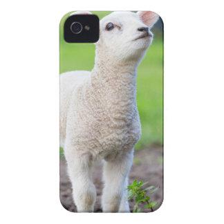 Ein weißes neugeborenes Lamm stehend im grünen Case-Mate iPhone 4 Hülle