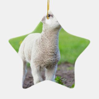 Ein weißes neugeborenes Lamm stehend im grünen Keramik Ornament