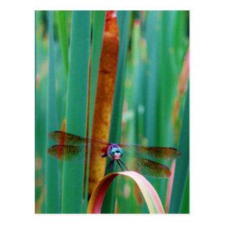 Eine aquamarine mit Augen Libelle mit Cattails Postkarte