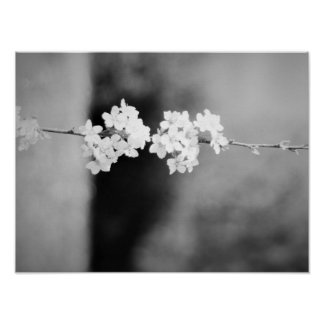 Eine einsame weiße Blume Poster