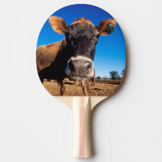 Eine Jersey-Kuh, die neugierig ist Tischtennis Schläger