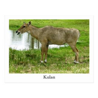 Eine Kulan Postkarte, Tiere, Maultier, Esel Postkarte