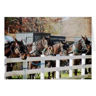 Eine Linie der amischen Pferde Karte