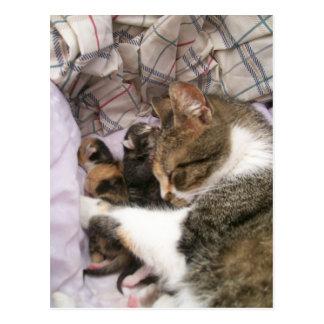 Eine Mutter-Liebe Postkarte