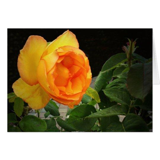 Eine Rose für meinen Bruder Karte
