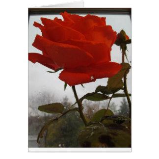 Eine Rose gerettet vom Sturm Karte