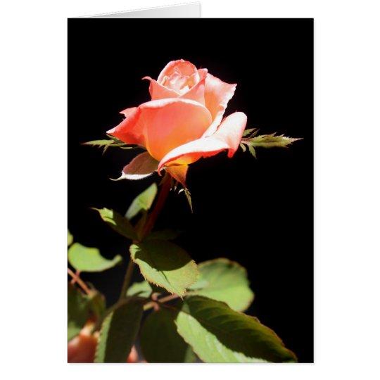 Eine Single-Rose - a Grußkarte