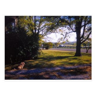 Eine Stelle der Hirtenschönheit in Brentwood, Postkarte
