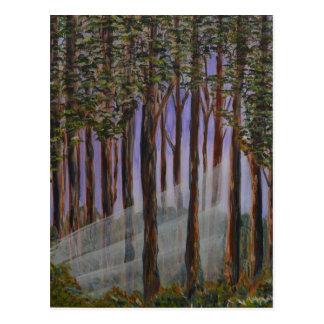 Eine Waldansicht; Sonnenlicht durch die Bäume Postkarte