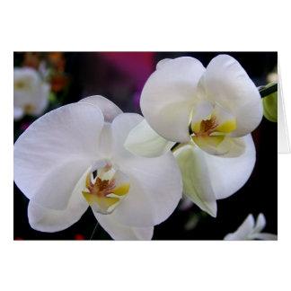 Einfach Orchideen Grußkarte