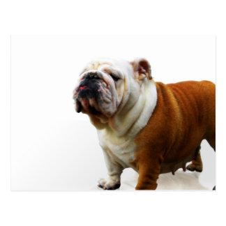 Eingebildete Bulldoggen-Postkarte Postkarte
