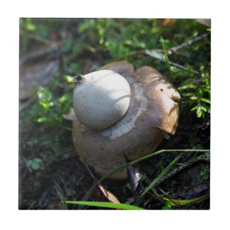 Eingesäumter Earthstar (Geastrum fimbriatum) Kleine Quadratische Fliese