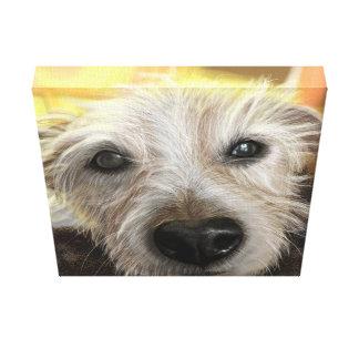 Eingewickelter Leinwand 12x12 Jack-Russel-Hund