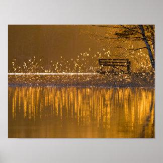 Einsame Bank durch den See im goldenen Licht Poster