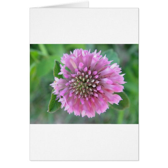 Einzigartige rosa Blüte Karte