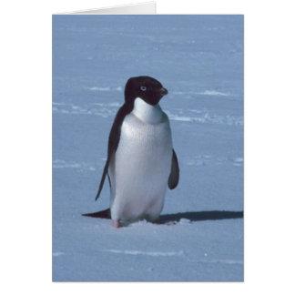 Einziger Pinguin im Schnee im Schnee Grußkarte