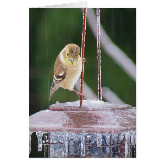 Eis-Tänzer - weiblicher Goldfinch-Vogel Grußkarte