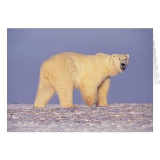 Eisbär in arktischem Alaska Karte