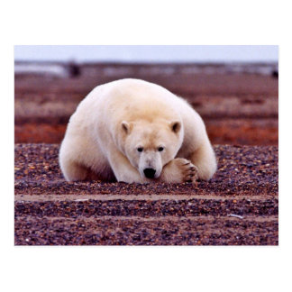 Eisbär-Stillstehen aber Alarm Postkarte