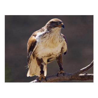 eisenhaltiger Falke Postkarte