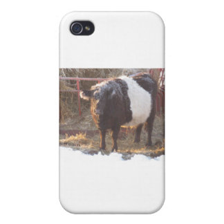 Eisige umgeschnallte Galloway-Kuh iPhone 4 Cover