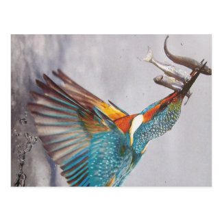 Eisvogel- Postkarte