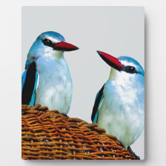 Eisvogel-Vögel Südafrika Fotoplatte