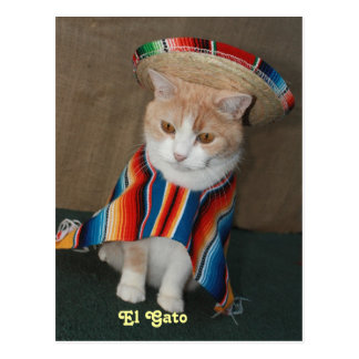 EL Gato Bubba Postkarte