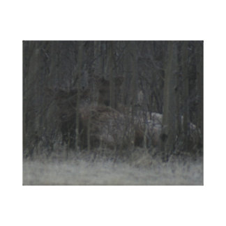 Elch-Kälber im Baum-Leinwand-Druck Leinwanddruck