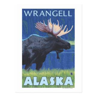 Elche nachts - Wrangell, Alaska Postkarte