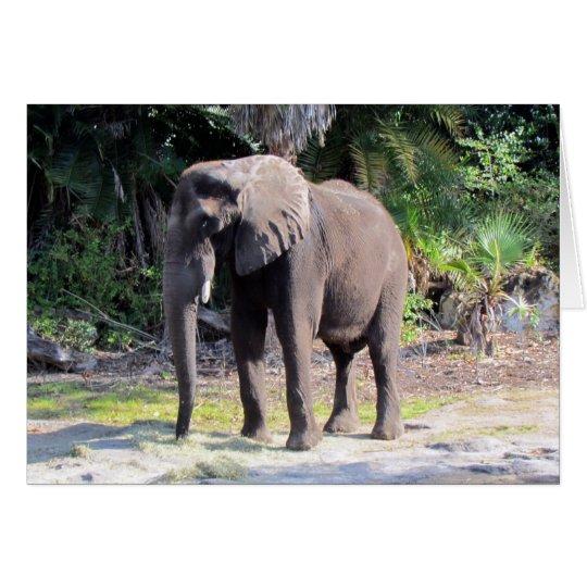 Elefant-Gruß-Karte Karte