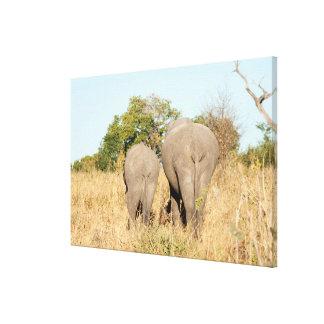 Elefanten, die weg gehen leinwanddruck