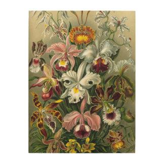 Elegante Orchideen, die Auf-Holz Leinwand-Drucke Holzdrucke