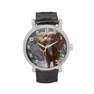 Éléphant africain montres