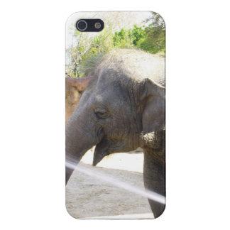 Éléphant espiègle coques iPhone 5
