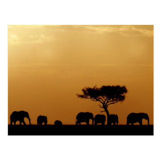 Elephants at Sunset Postkarte