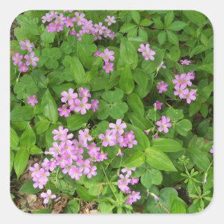 Empfindliche rosa Frühlings-Wildblumen Quadratischer Aufkleber