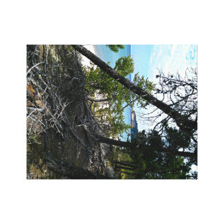 Emporragen durch Bäume Leinwanddruck