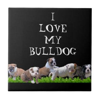 Englische Bulldogge Kleine Quadratische Fliese