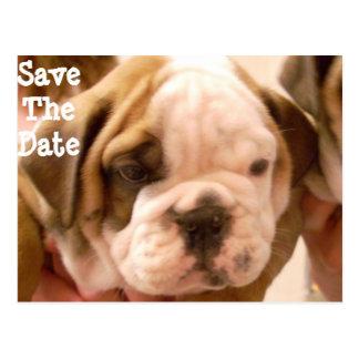 Englischer Bulldoggen-Welpe Postkarte